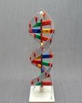 Модель структуры ДНК