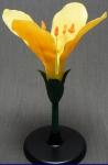 Модель цветок капусты