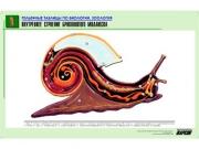 """Рельефная таблица """"Внутреннее строение брюхоногого моллюска"""" (формат А1, матовое ламинир.)"""