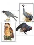"""Модель-аппликация """"Разнообразие высших хордовых 1. Пресмыкающиеся и птицы"""" (ламинированная)"""