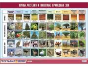 """Таблица демонстрационная """"Почвы, растения и животные природных зон"""" (винил 100x140)"""