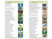 "Комплект карточек (10) ""Обучающий калейдоскоп. Природа"""