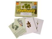 """Гербарий """"Деревья и кустарники"""" (22 вида, с иллюстрациями)"""