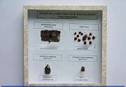 """Коллекция энтомологическая """"Примеры защитных приспособлений у насекомых"""""""