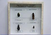 """Коллекция энтомологическая """"Приспособительные изменения в конечностях насекомых"""""""