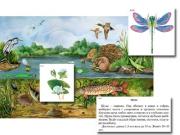 """Магнитный плакат-аппликация """"Водоем: биоразнообразие и взаимосвязи в сообществе"""""""