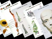 Таблицы по природоведению 1-3 кл. (46 шт, ф. А2)