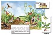 """Магнитный плакат-аппликация """"Луг: биоразнообразие и взаимосвязи в сообществе"""""""