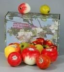 """Набор муляжей """"Дикая форма и культурные сорта яблок"""""""