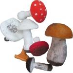 Набор муляжей грибов съедобных и ядовитых