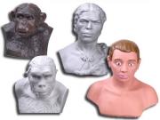 """Комплект палеонтологических моделей """"Происхождение человека"""""""