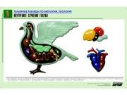 """Рельефная таблица """"Внутреннее строение голубя"""" (формат А1, матовое ламинир.)"""
