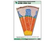 """Рельефная таблица """"Клеточное строение стебля""""  (формат А1, матовое ламинир.)"""