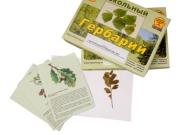 """Гербарий """"Растительные сообщества. Лес"""" (9 видов, 10 планшетов, с иллюстрациями и фотографиями)"""