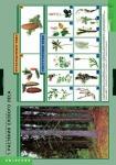 Растения и окружающая среда