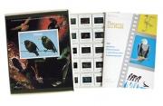 Слайд-альбом «Птицы»