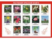 """Таблица демонстрационная """"Растения Красной книги"""" (винил 70х100)"""